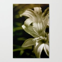 Lilies of the Vally Canvas Print