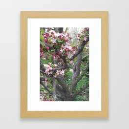 Craggy Crabby Framed Art Print