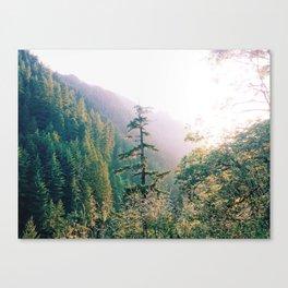 Solo Pine Tree Canvas Print