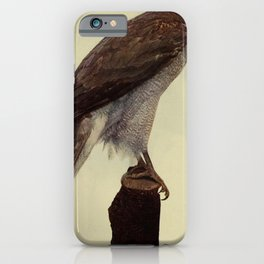 Vintage Print - Birds and Nature (1904) - American Goshawk iPhone Case