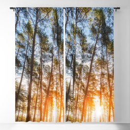 sunset behind trees in forest landscape - nature photography Blackout Curtain