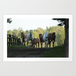 Even Horses have Bad Mornings! Art Print