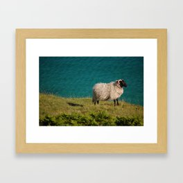 Irish Sheep Framed Art Print