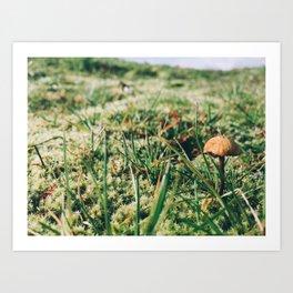 Tiny Mushroom Art Print