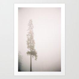 Old Pine Art Print
