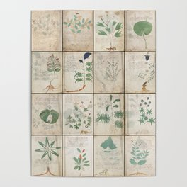 The Voynich Manuscript Quire 1 - Natural Poster