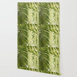 House Plant Fern Leaf Silhouette Sunlight Zen Photo Wallpaper