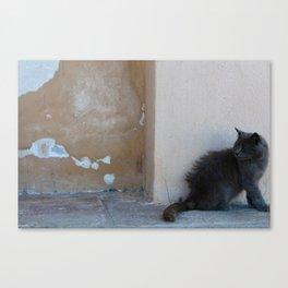 Grecian Cat Canvas Print