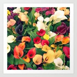 Rainbow Calla lily Art Print