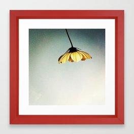 FLOWER 009 Framed Art Print