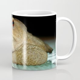 A Common Toad With Philosophical Disposition Coffee Mug
