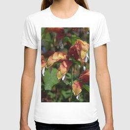 Shrimp Plant - Justicia brandegeana T-shirt