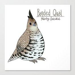 Banded Quail Canvas Print