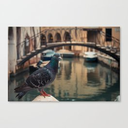 Dove perched on one of the points of the city of Venice Canvas Print