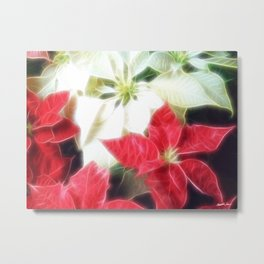 Mixed Color Poinsettias 2 Angelic Metal Print