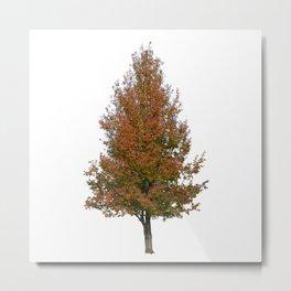 pear tree on white Metal Print