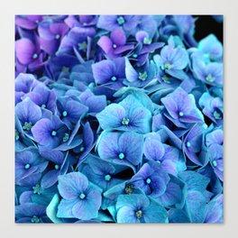 Purple Blue hydrangea Canvas Print