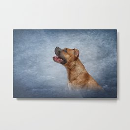 American Staffordshire Terrier  3 Metal Print