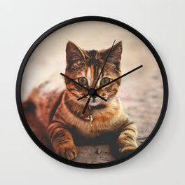 Cute Young Tabby Cat Kitten Kitty Pet Wall Clock