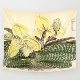 Paphiopedilum concolor Wall Tapestry