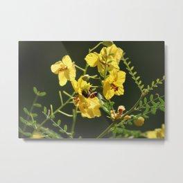 Macro of Bee Pollinating a Palo Brea Blossom Metal Print