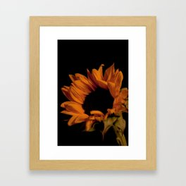Sunflower 2 Framed Art Print