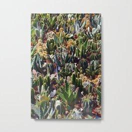 Bed of Cactus Metal Print