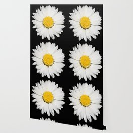 Top View of a White Daisy Isolated on Black Wallpaper