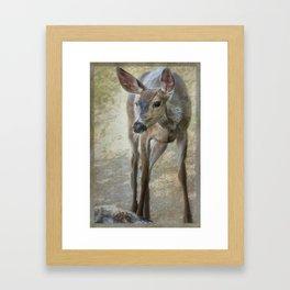 Doe Timidly Moving Past Framed Art Print