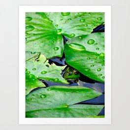 Peek  A Boo frog Art Print