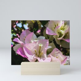 Bougainvillea Mini Art Print