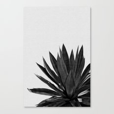 Agave Cactus Black & White Canvas Print