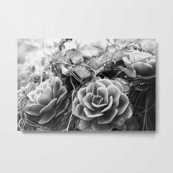 succulents soul Metal Print