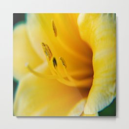 Day Lily Close up-4 Metal Print