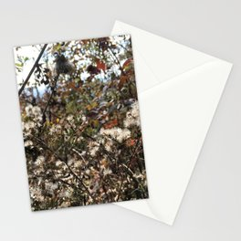 Blue Ridge Parkway Microcosm Stationery Cards