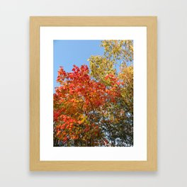 Autumn Leaves II Framed Art Print