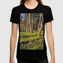 Dreaming Pine Trees in the Evening Light  T-shirt