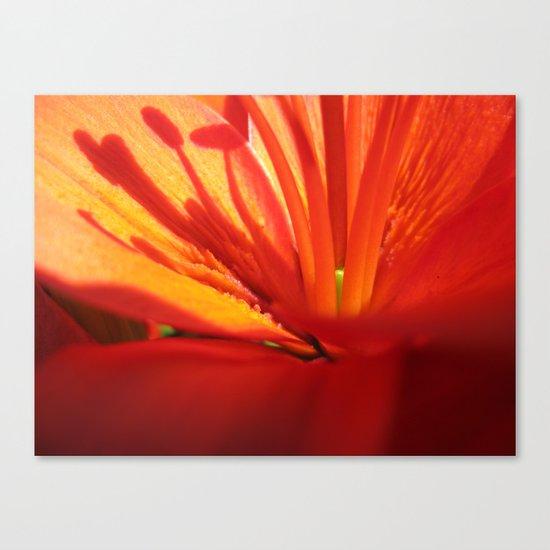 Red Stamen 86 Canvas Print