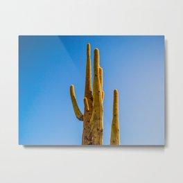 Minimalist Green Cactus Blue Sky Mexican Desert Landscape Metal Print