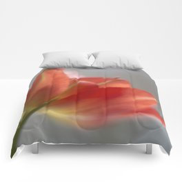 Holy Grail? Comforters