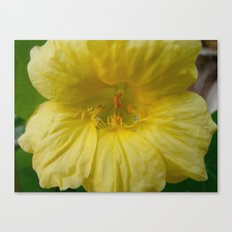 Sunny Yellow Canvas Print