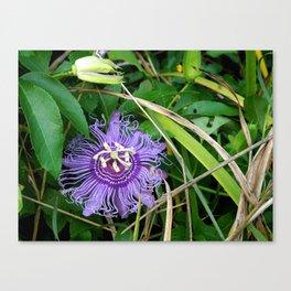 Passion vine flower Canvas Print