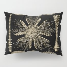 """Echinidea"" from ""Art Forms of Nature"" by Ernst Haeckel Pillow Sham"