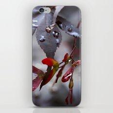 Japanese Maple Seeds II iPhone & iPod Skin