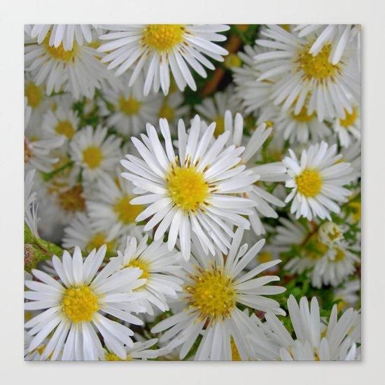 white daisy I Canvas Print