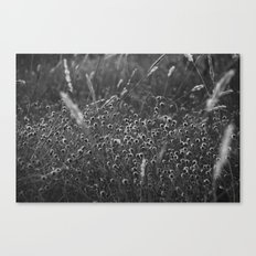 pods Canvas Print