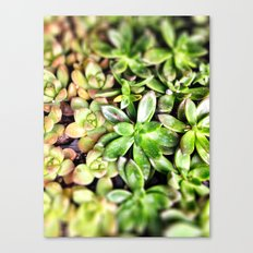 Fat Plants Canvas Print