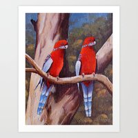 BIRDS OF AUSTRALIA Art Print