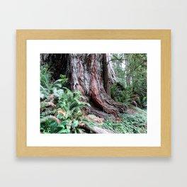 Giant Redwoods Rainforest 06 Framed Art Print