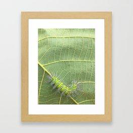 My green friend.  Framed Art Print